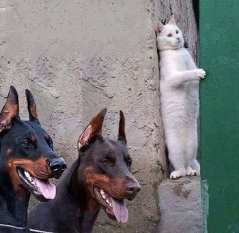 Несколько фотографий, доказывающих, что кошки — самые смешные и веселые
