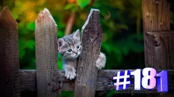 Смешные коты | Приколы с котами | Видео про котов | Котомания # 181 (видео)