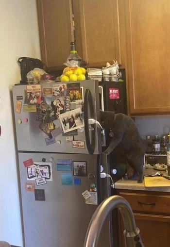 Кошки, которые, кажется, плевать хотели на все эти ваши правила