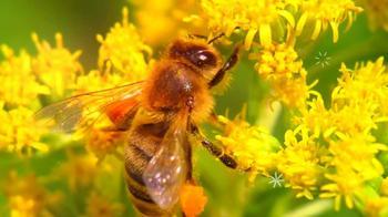 Цветочная пыльца: польза и применение для здоровья человека