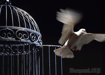 Птица в клетке (Стих)