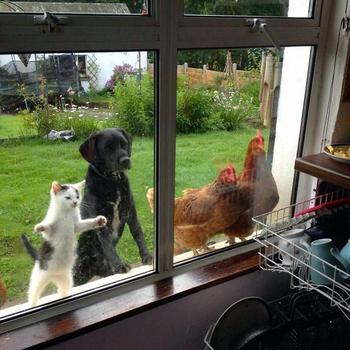 Животные, которые должны попасть внутрь прямо сейчас