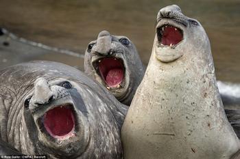 Самые смешные фотографии животных на конкурсе Comedy Wildlife Photography Awards