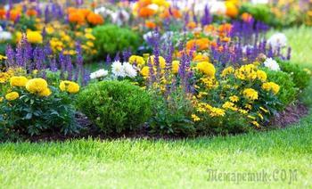 Как правильно сочетать растения на клумбе по цветам