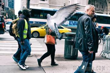 Уличный фотограф Ронен Берка