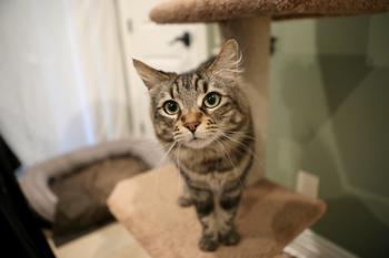Американец снял для пары кошек квартиру за 1,5 тыс долл, потому что они не поладили с его собакой