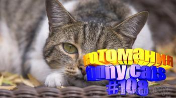Смешные котики поднимут настроение