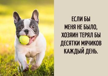 Собачьи мысли