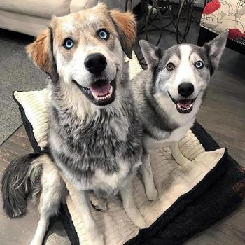 25 скрещенных пород собак, чья кровь смешалась, чтобы понравиться вам