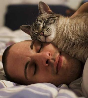 Вот почему коты обожают спать на людях
