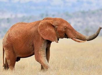 9 немыслимых экспериментов над животными на грани этики и норм морали