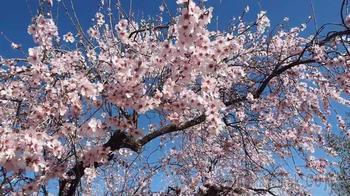 Цветет миндаль (Стих)