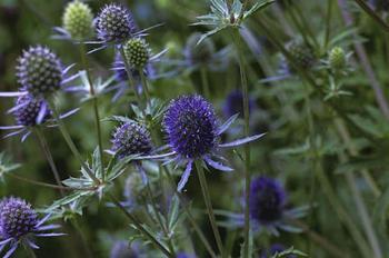 Растения с колючками — названия с фото, классификация видов
