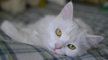 Кота вырвали из пасти бездомной собаки