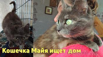 Молодая кошка Майя ищет дом!