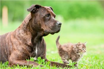 Питбуль привел домой беременную кошку и помог ей родить