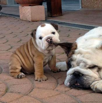 Милые щеночки для хорошего настроения
