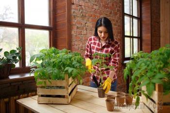 19 самых серьезных ошибок при выращивании рассады в домашних условиях
