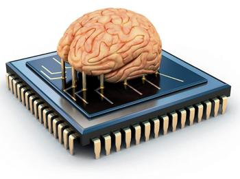 На шаг ближе к матрице? Реально ли вырастить живые компьютеры?