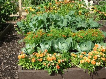 Смешанные посадки и совместимость растений в саду и огороде