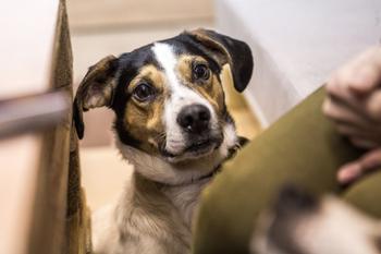 Нельзя кормить, но можно забрать домой: в Новосибирске открыли кафе с бездомными собаками