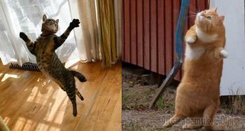 Так танцуют кошки, когда их никто не видит