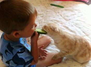Кошка человеку друг