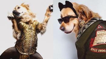 Этот ретривер заслужил «Оскар»: питомец, в точности повторяющий сценические образы Мадонны