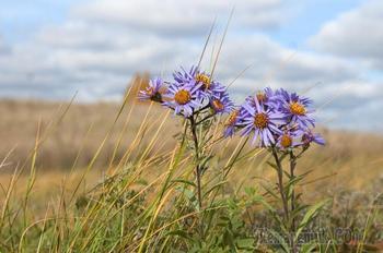 Последние, осенние цветы (Стих)