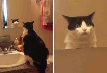 17 домашних животных, которые настолько эмоциональны, что по ним плачет Оскар
