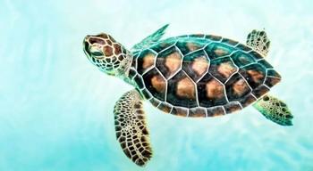 Захватывающие факты про морских черепах