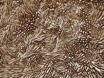Ковры из ракушек от Rowan Mersh