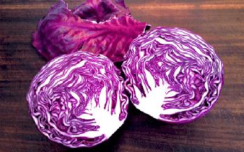 Выращивание краснокочанной капусты