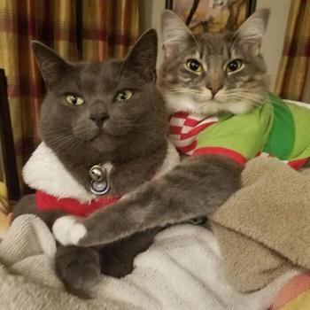 Наглядные причины, почему две кошки лучше, чем одна