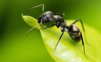 ТОП-9 Самых эффективных способов борьбы с муравьями на садовом участке