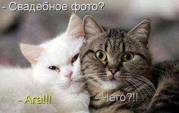 Самые забавные котики;))