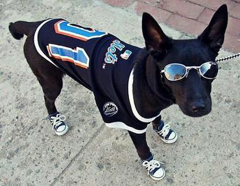 Самая крутая собака в мире по кличке Аполлон