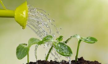 Как правильно поливать комнатные растения