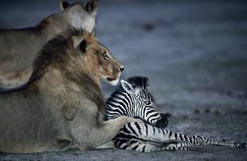 Иногда животные ведут себя непривычно