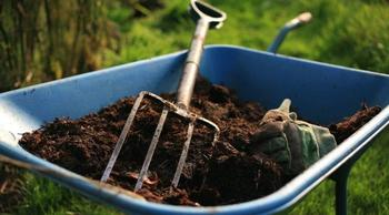 Чем подкормить малину осенью после сбора урожая и обрезки
