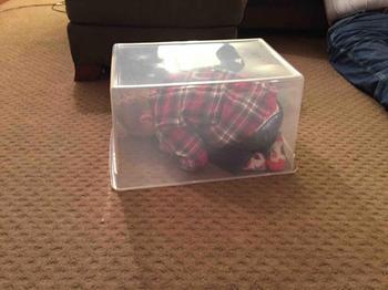 Смешно до слез когда ребенок прячется
