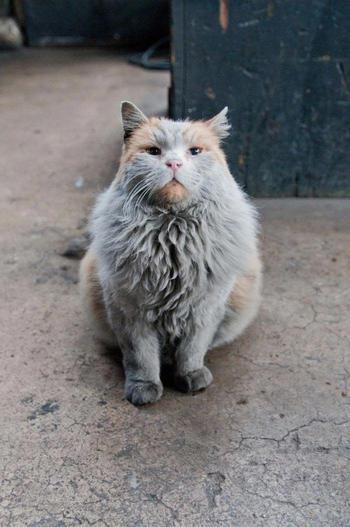 Грязь — кошка, которая всегда выглядит так, будто ей нужна ванна. Но вода её не отмоет