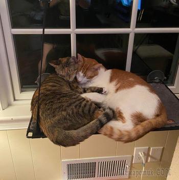 18 раз, когда люди застали своих котиков так мило спящими вместе, что не могли не поделиться этим