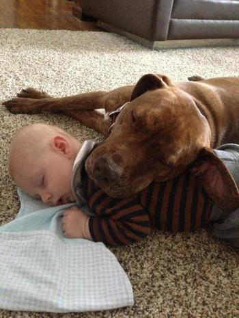 20 домашних любимцев, которые знают толк в самых удобных подушках