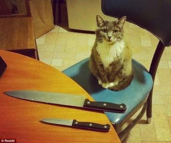 Пушистое зло! Коты, которые явно задумали что-то нехорошее