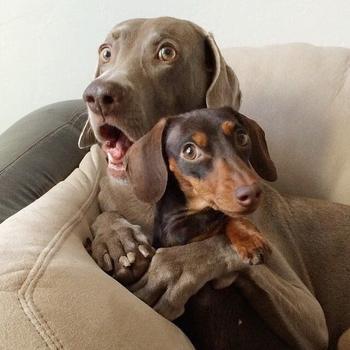 16 эмоций от животных, которые так знакомы каждому человеку