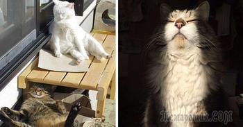 Коты, которые любят солнце больше всего на свете