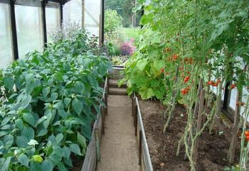 С чем рядом можно сажать помидоры: выбор соседей по грядке