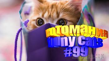 Смешные коты   Приколы с котами   Видео про котов   Котомания #99