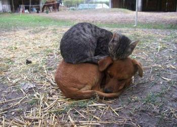 Фотографии самой необычной дружбы животного мира
